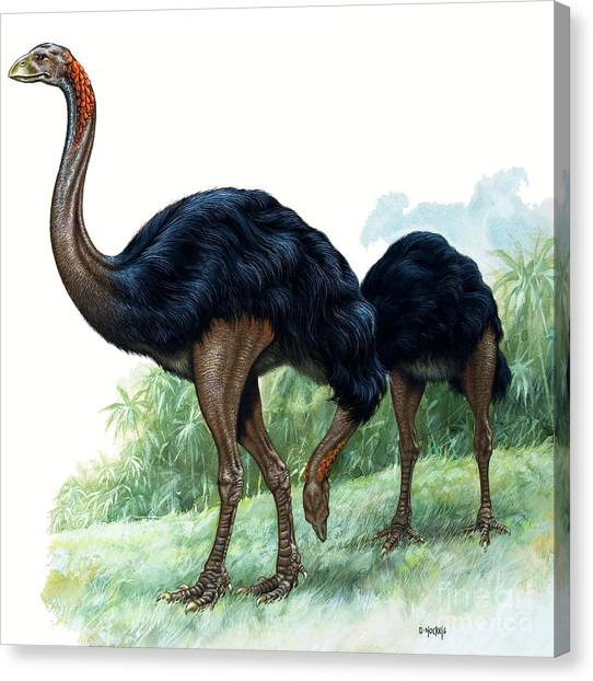 Emus Canvas Print - Pre-historic Birds by David Nockels