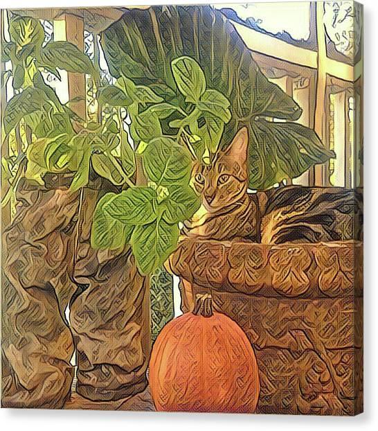 Precious Pumpkin Canvas Print