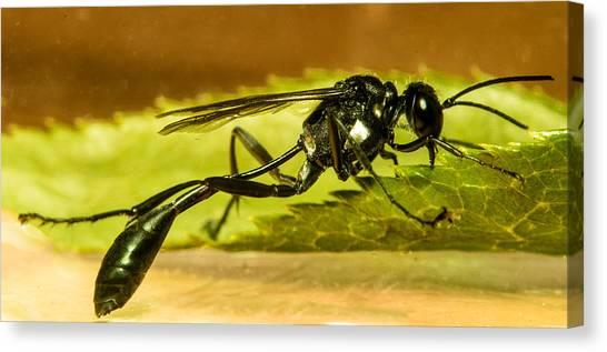 Preditory Canvas Print - Preditory Wasp 2 by Douglas Barnett