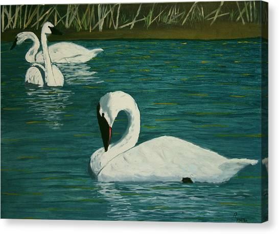 Preening Swans Canvas Print by Robert Tower