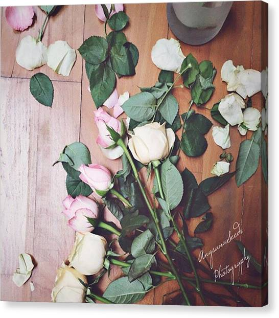 Roses Canvas Print - Preparing For A Shoot. #roses by Ivy Ho