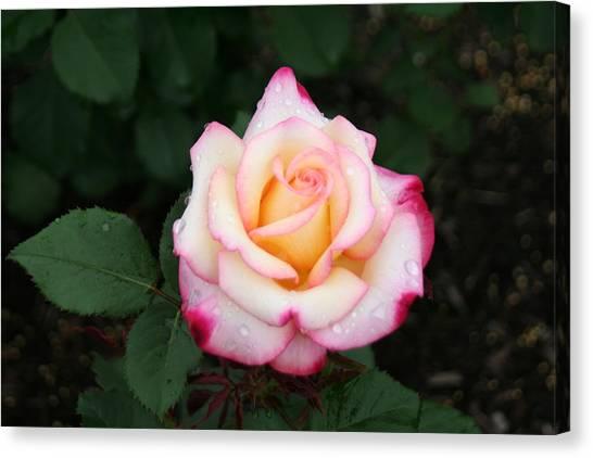 Pretty Bloom Canvas Print by Gerald Mitchell