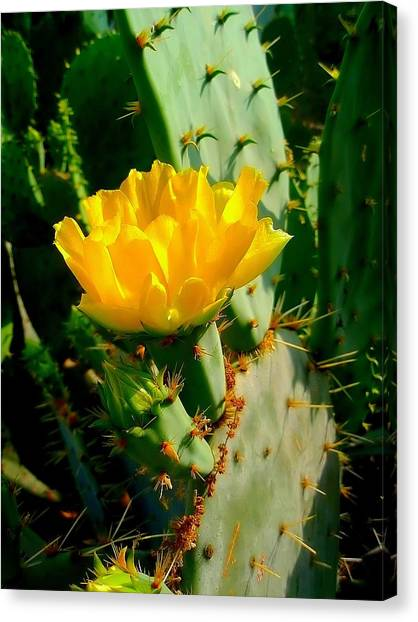 Pretty But Do Not Touch  Canvas Print
