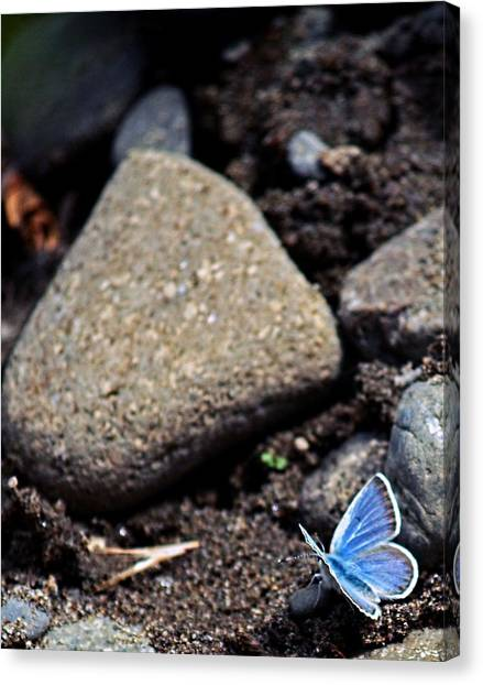 Pretty Butterfly Canvas Print