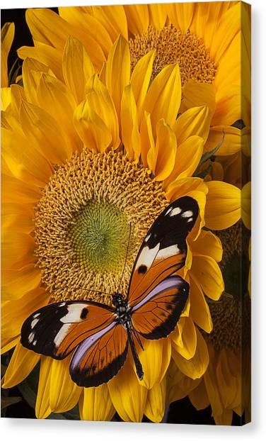 Golden Gate Bridge Canvas Print - Pretty Butterfly On Sunflowers by Garry Gay