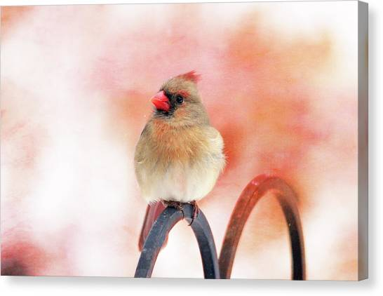 Pretty Cardinal Canvas Print
