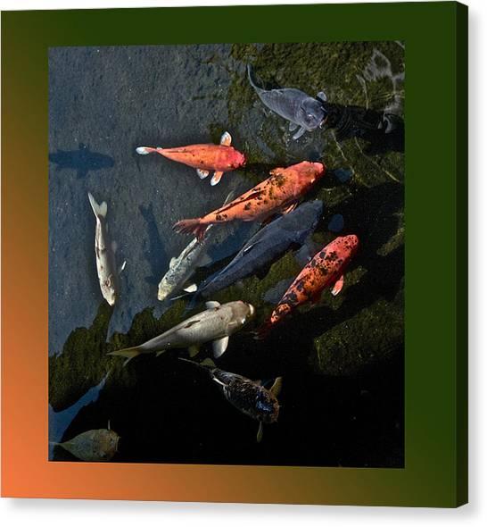 Pretty Fish Canvas Print