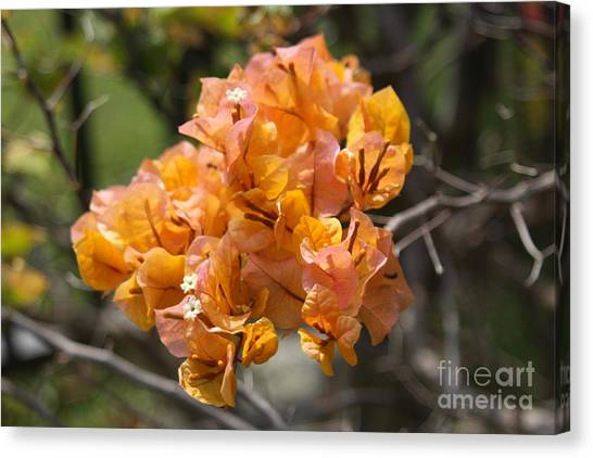 Pretty Flower Canvas Print by Dick Willis