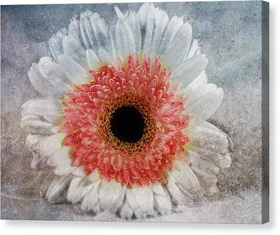 Pretty Gerbera Macro Canvas Print by Georgiana Romanovna