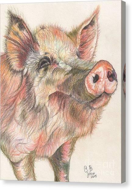 Pretty Imporkant Pig Canvas Print by Chris Bajon Jones