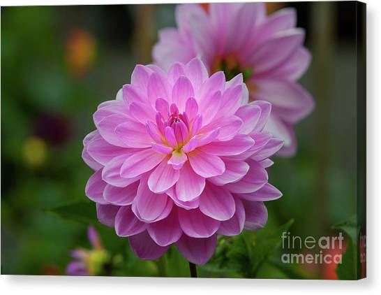 Pretty In Pink 1 Canvas Print
