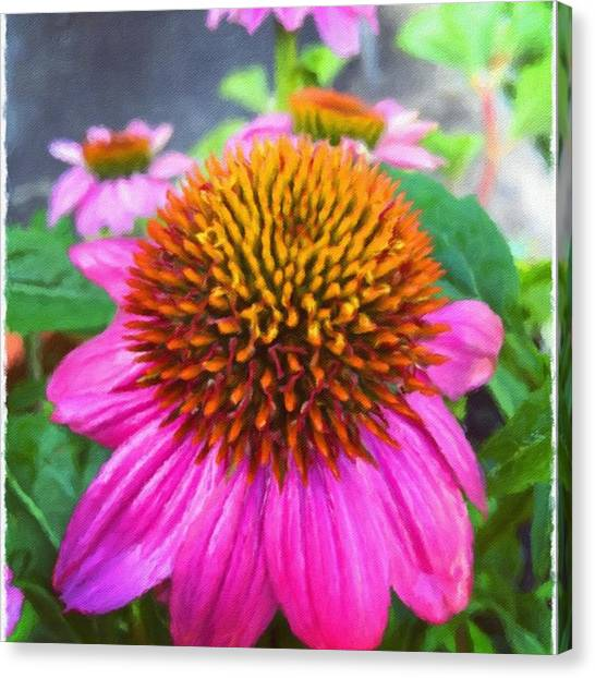 Pink Canvas Print - Pretty In Pink #impresso #flower by Joan McCool