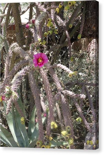 Flower Is Pretty In Pink Cactus Canvas Print