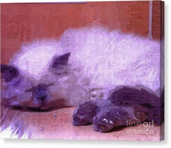 Himalayan Cats Canvas Print - Pretty Kitty by Deborah Selib-Haig DMacq