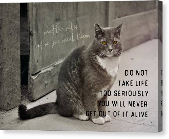 Pretty Kitty Quote Canvas Print by JAMART Photography