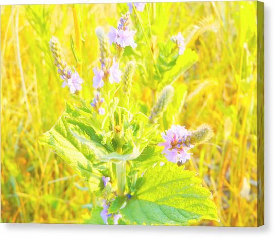 Pretty Lilac Canvas Print