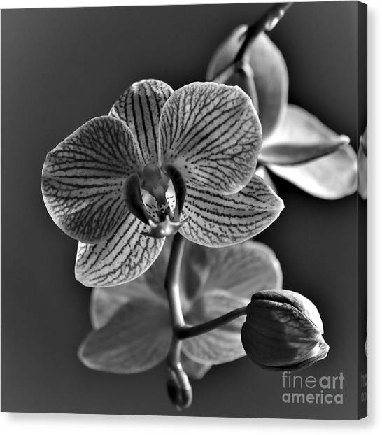 Canvas Print featuring the photograph Pretty Orchid Bw by Jeremy Hayden