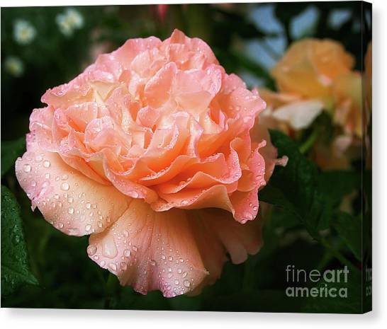 Pretty Peach Peony Flower Canvas Print