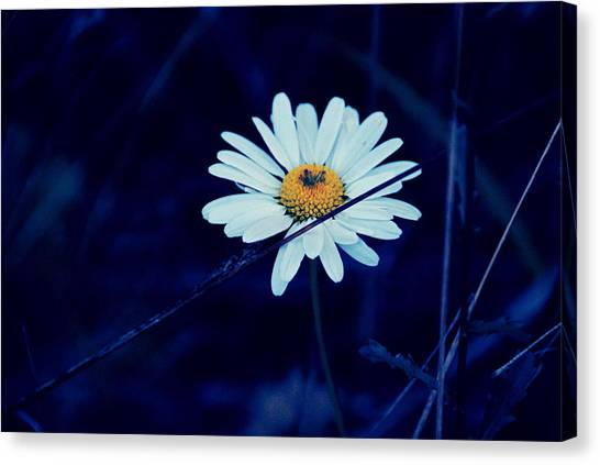 Pretty Petals Canvas Print