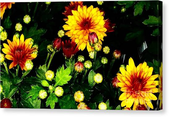 Pretty Petals Canvas Print by Marsha Heiken