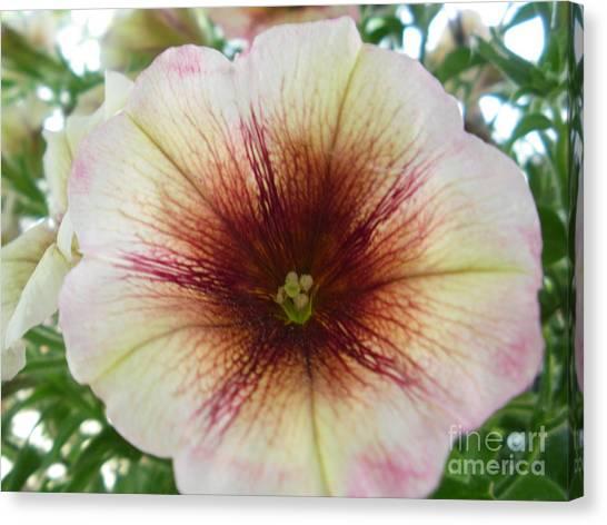 Pretty Petunia Canvas Print