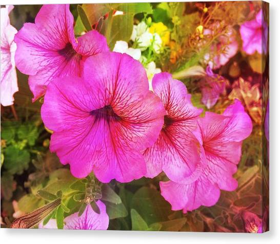 Pretty Pink Petunias Canvas Print