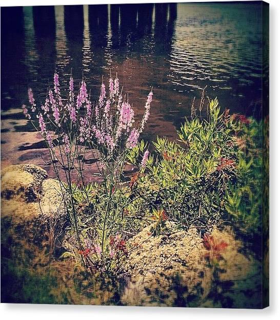 Purple Canvas Print - Pretty Purple Flowers Along The Bayou by Joan McCool