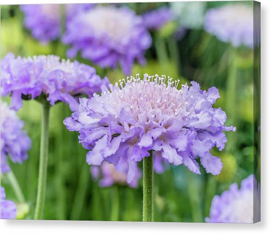 Canvas Print featuring the photograph Pretty Purple by Nick Bywater