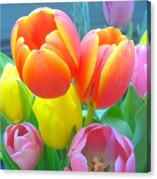 Home Canvas Print - Pretty #spring #tulips Make Me Smile by Shari Warren