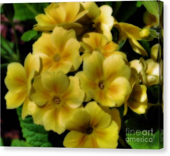 Pretty Yellow Primrose Canvas Print
