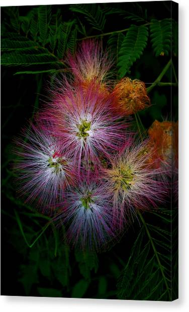 Prickly Flower Canvas Print by Christopher Lugenbeal