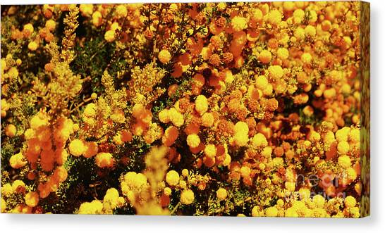 Prickly Moses Canvas Print