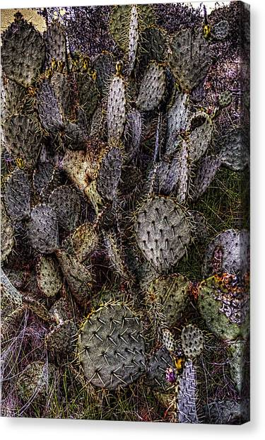Prickly Pear Cactus At Tonto National Monument Canvas Print