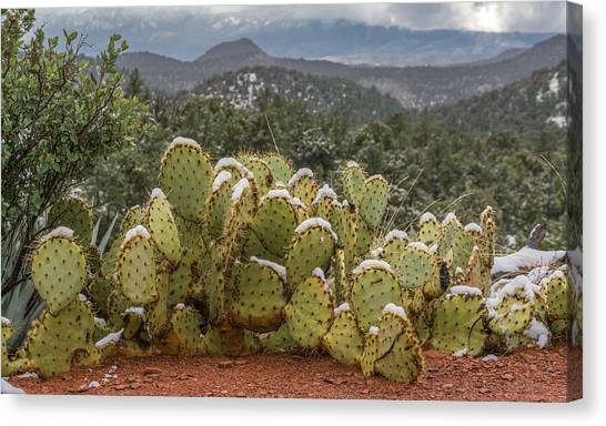 Cactus Country Canvas Print