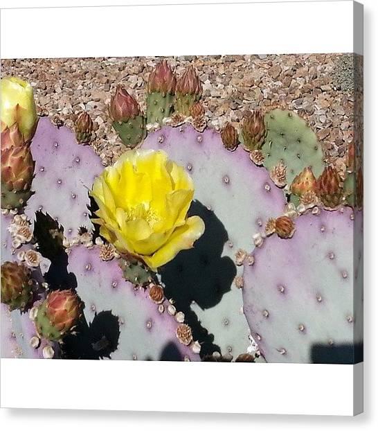 Desert Canvas Print - Prickly Pear In Bloom #desert #cactus by Karyn Robinson