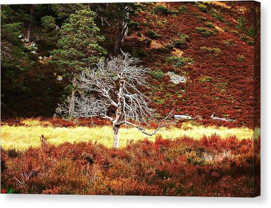Canvas Print featuring the photograph Pride by HweeYen Ong