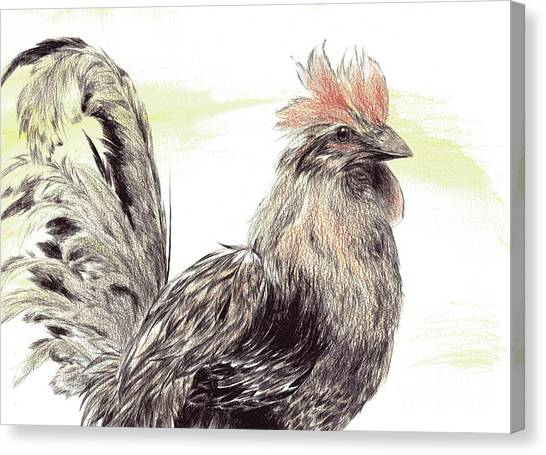 Pride Of A Rooster Canvas Print