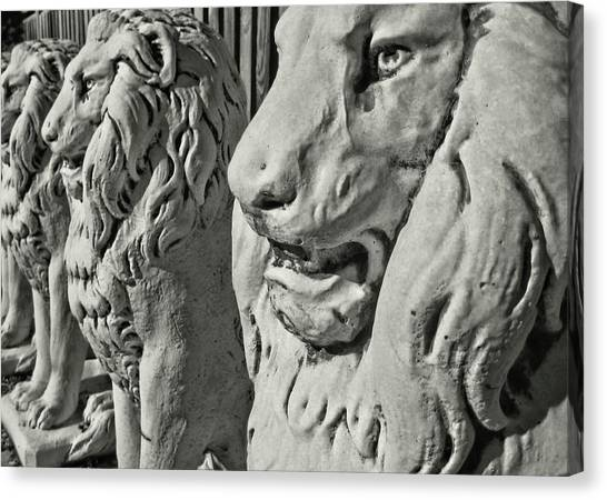 Pride Of Lions Canvas Print by JAMART Photography