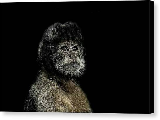 Primates Canvas Print - Pride by Paul Neville