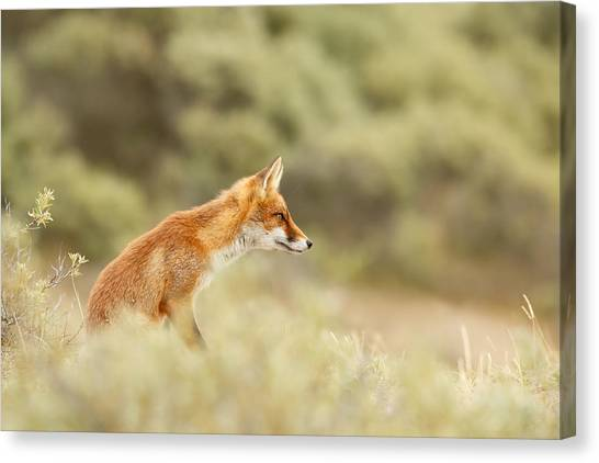 Foxes Canvas Print - Princess Of The Hill - Red Fox Sitting On A Dune by Roeselien Raimond