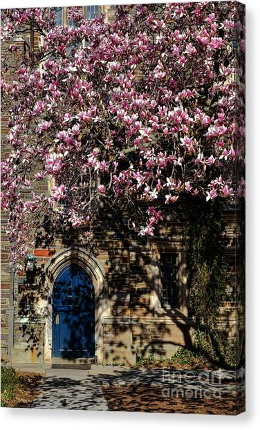 Princeton University Canvas Print - Princeton University Magnolia And Door by Olivier Le Queinec