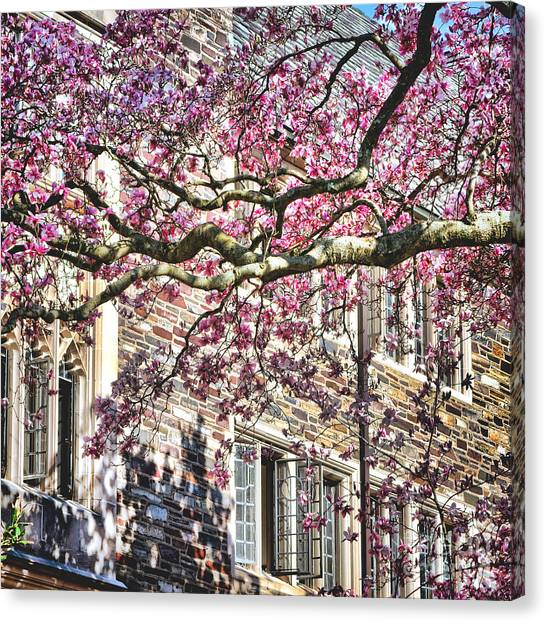 Princeton University Canvas Print - Princeton University Springtime Celebration  by Olivier Le Queinec