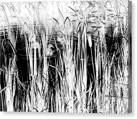 Private Duck Swimming Hole 2 In Black And White Canvas Print by Elizabeth Ann  Roy