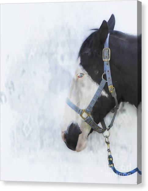 Profile In Horse  Canvas Print by Steven Digman