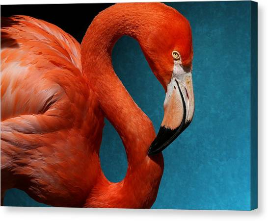 Profile Of An American Flamingo Canvas Print