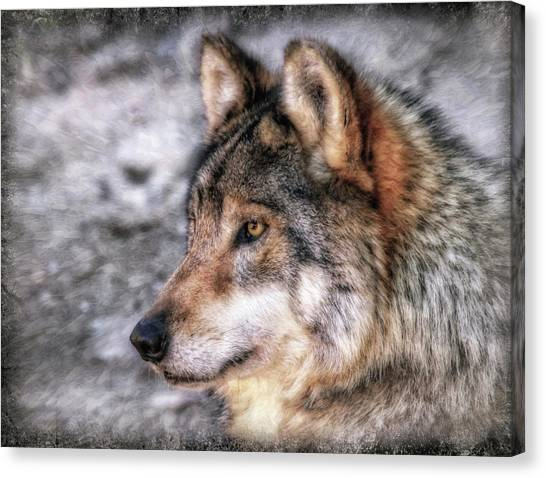 Canvas Print featuring the photograph Profiling  by Elaine Malott