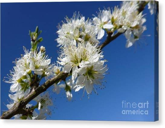 Promise Of Spring Canvas Print
