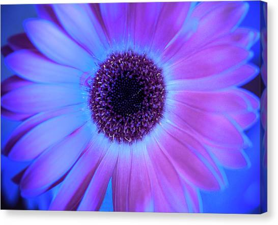 Canvas Print featuring the photograph Promises Of Blue And Pink by Christi Kraft