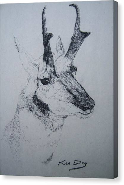Pronghorn Antelope Canvas Print by Ken Day