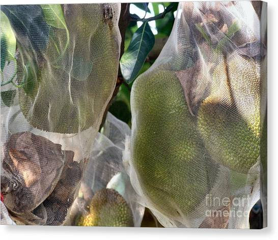 Protect Your Durian Canvas Print by Kathy Daxon